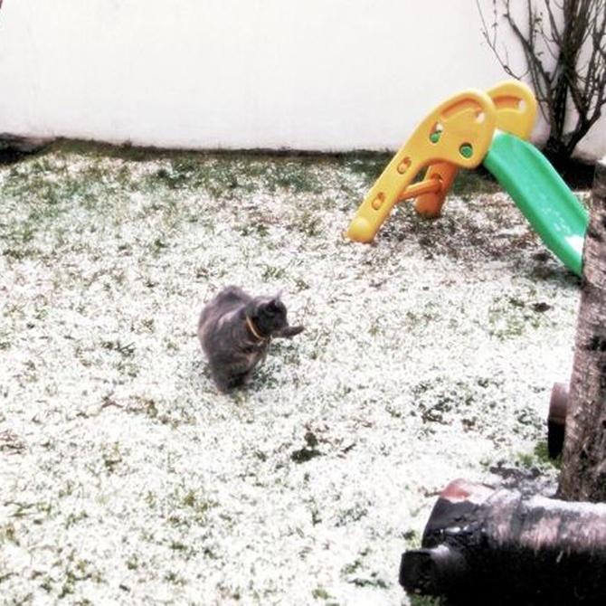 El mantenimiento del jardín en invierno