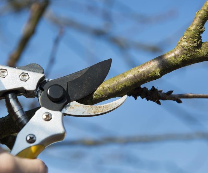 Jardinería: Servicios de Aguateck