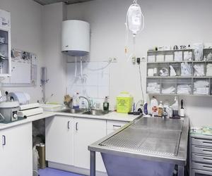 Veterinario de urgencias en Avilés
