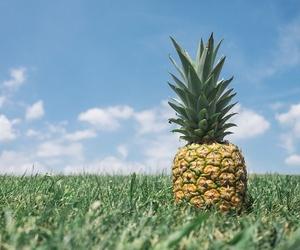 Consejos para plantar árboles frutales