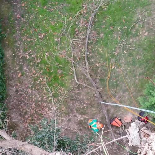 Poda de árboles en Bizkaia | Arbotek