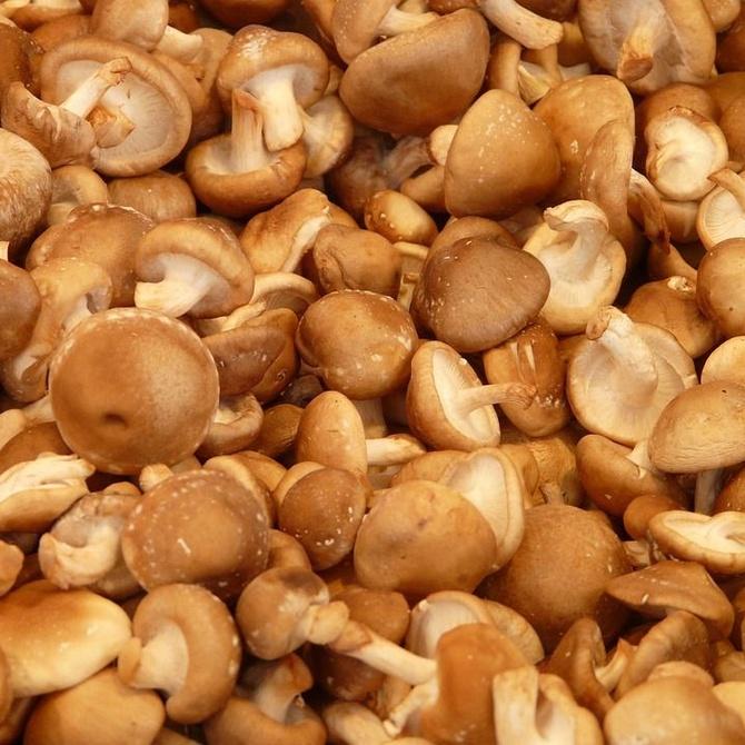 ¿Conoces el hongo Shiitake?