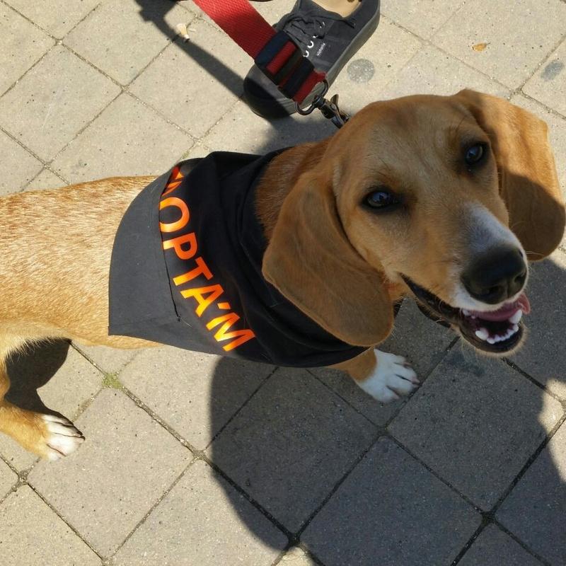 Adopciones caninas: Servicios de Centre Caní De Pedracastell
