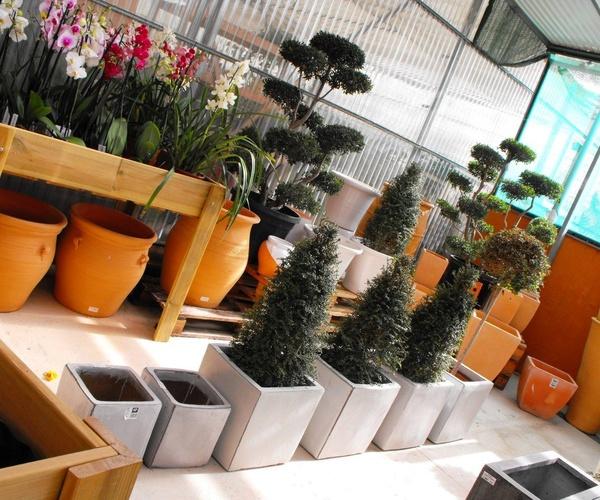 Viveros de jardinería en Marbella | Viveros González