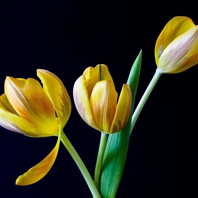 ¿De qué están hechas las flores?