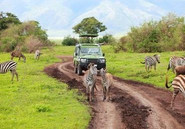 Safari en el Sur de Kenia y Costa del Índico