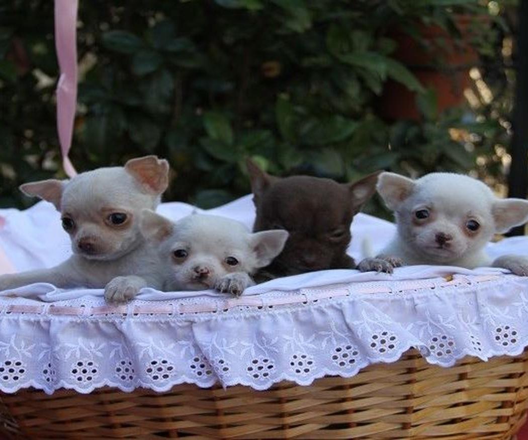 Los criadores profesionales contra el abandono de perros