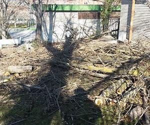 Tala de árboles en Valladolid