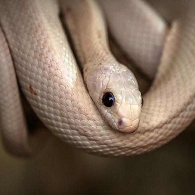 Las enfermedades más comunes de las serpientes