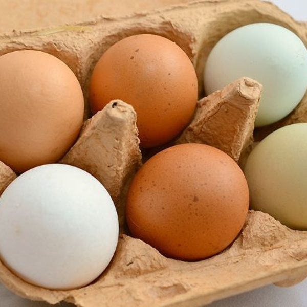 Mantener los huevos en perfecto estado