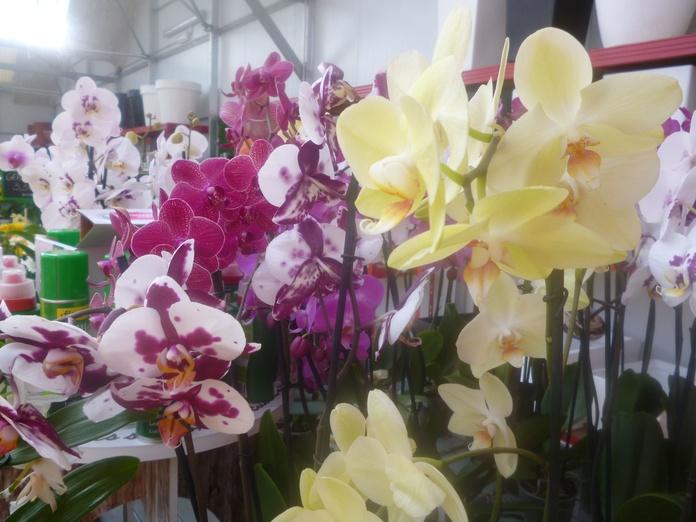 Curso gratuito de orquídeas