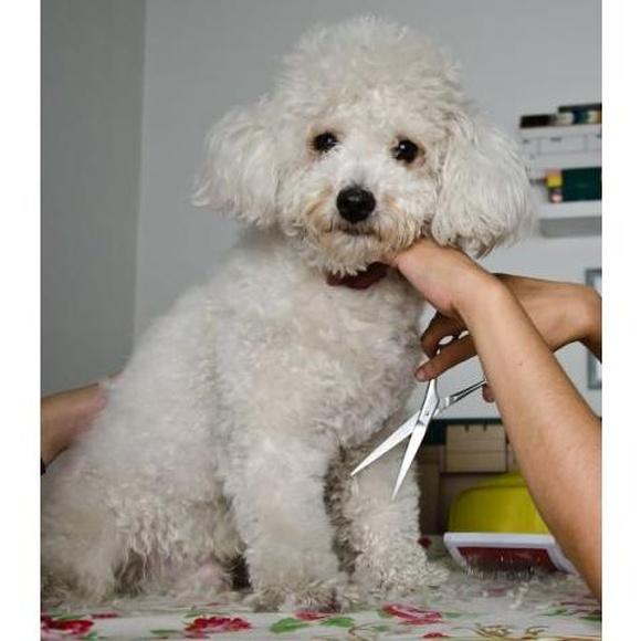 Peluquería canina : Servicios de Centro Veterinario Ciempozuelos