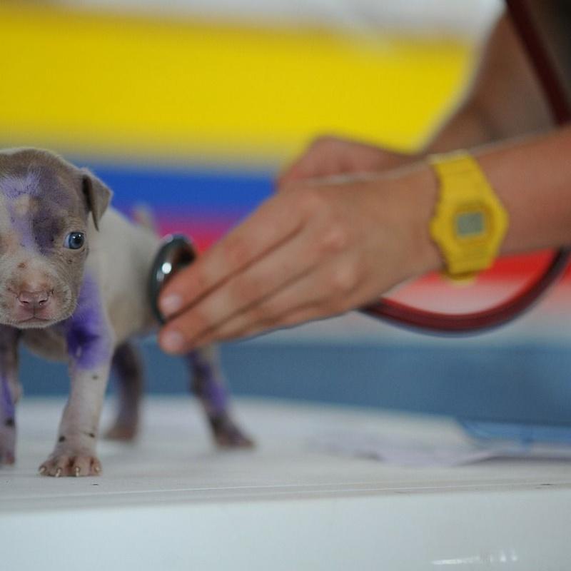 Medicina especializada: Servicios veterinarios de Clínica Veterinaria Dobermann II