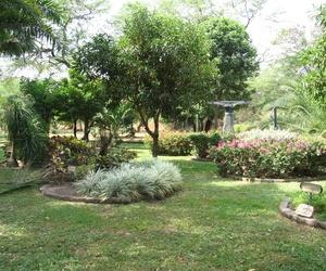 Limpieza de jardines en Oviedo