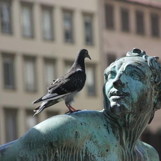 Problemas derivados de las plagas de palomas