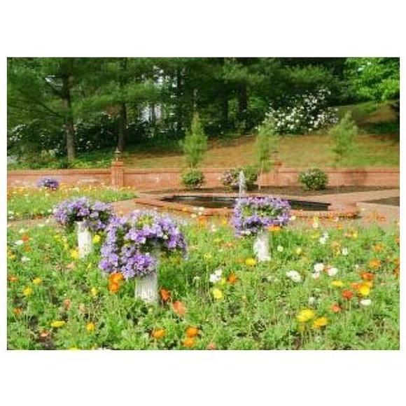 Tratamientos fitosanitarios: Mantenimiento de Jardines de Jardinería Suso