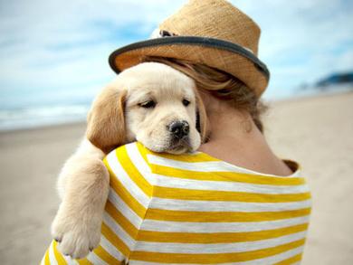 Por qué deberías poner un animal en tu vida