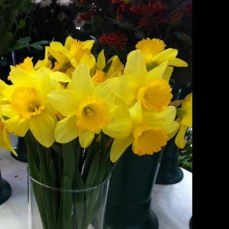 Narcisos. Flor de temporada