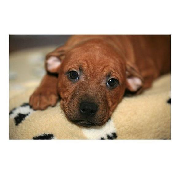 Desparasitaciones y vacunas del cachorro