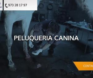 Clínica veterinaria de Lleida | V3 Equip Veterinari