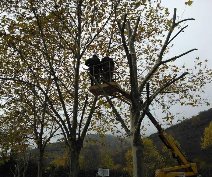 Poda de ramas altas