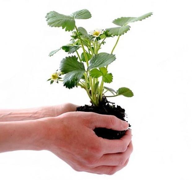 Productos para el cuidado y mantenimiento: Productos  de Endanea Garden Center