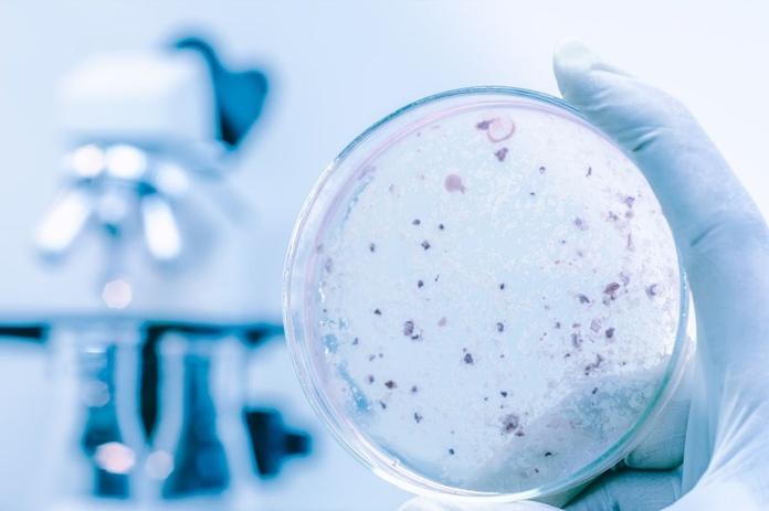Desinfección: Servicios de Control de Plagas Cejudo
