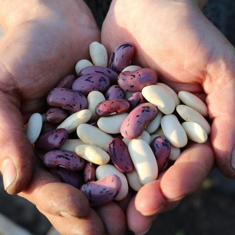 Legumbres a granel: Productos y Servicios de Alimentación Mariluz
