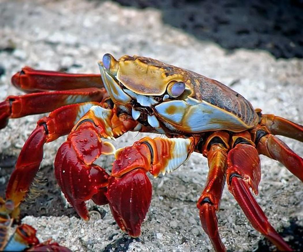 Tipos de crustáceos y moluscos en el mar Cantábrico