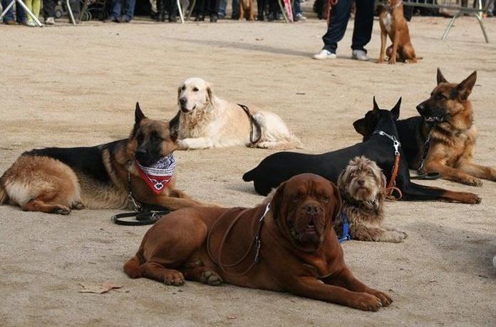 Adiestramiento canino en Sant Pere de Vilamajor