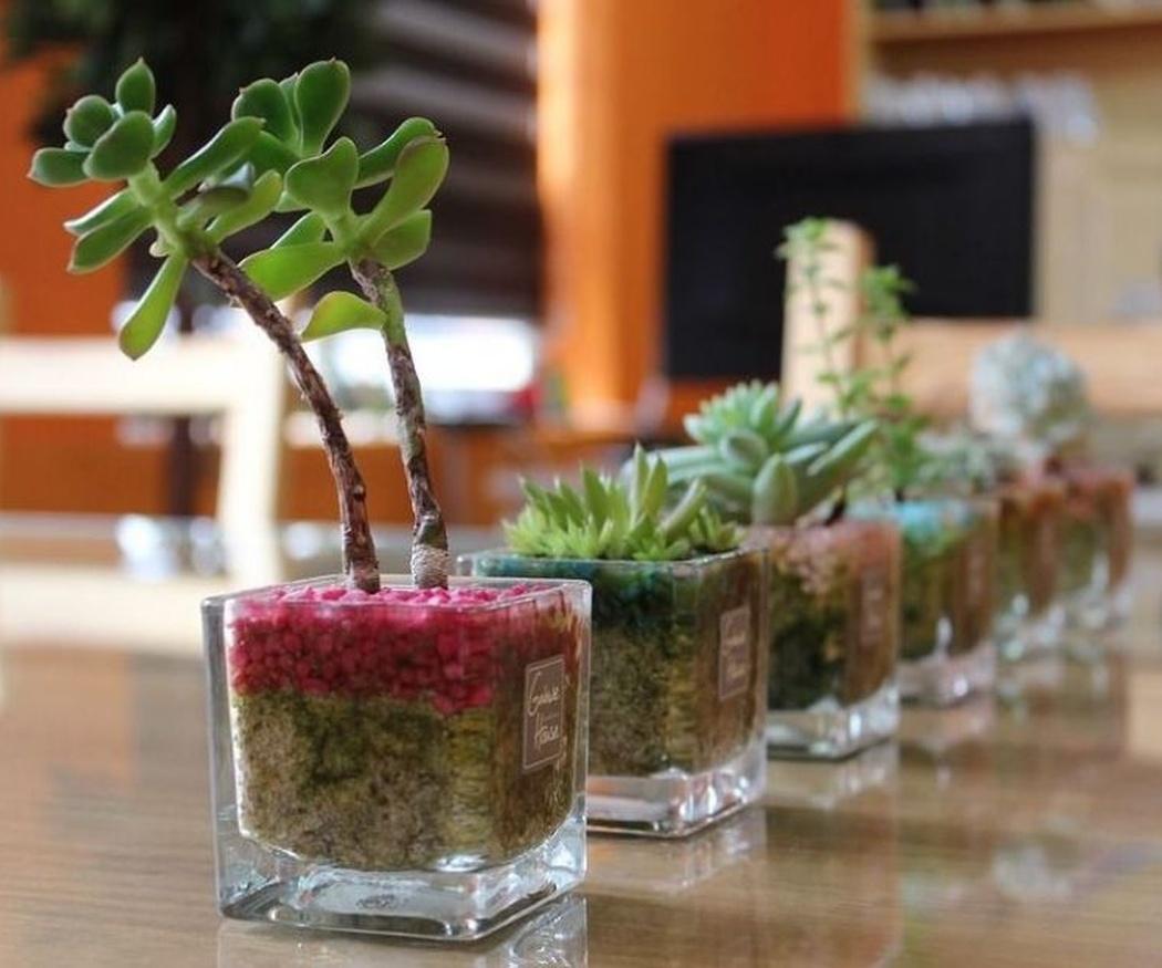 Cómo elegir los fertilizantes para tus plantas (I)