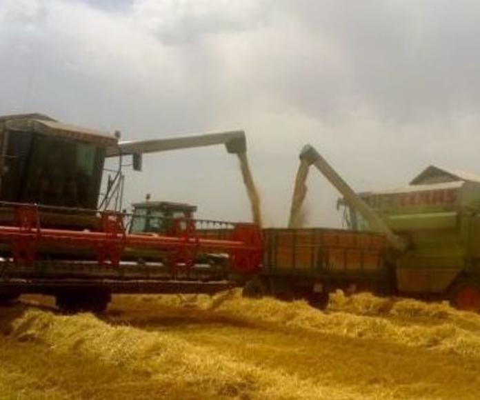 Máquinas para cosechar