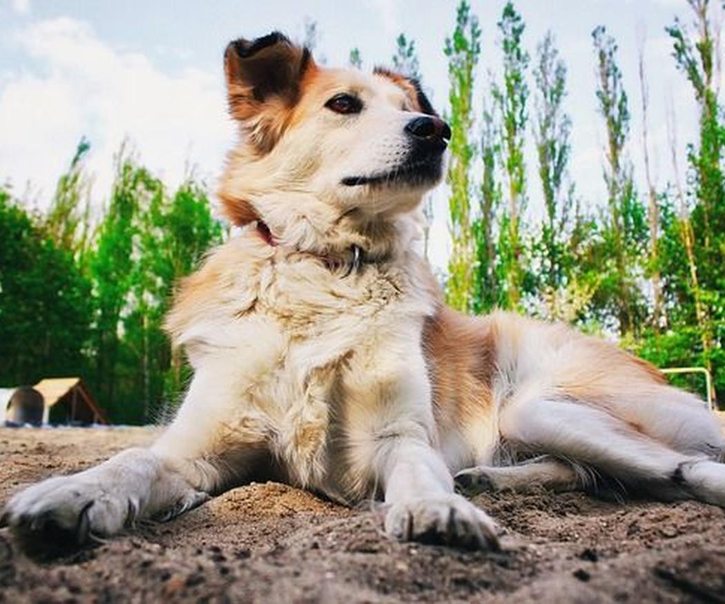 ¿Qué debe y qué no debe comer tu perro?