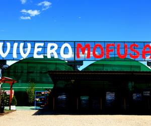 Venta de leña en Madrid norte | Mofusa