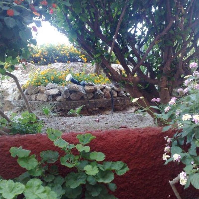 Jardinería: Servicios de West Rim Servicios Integrales, S.L.