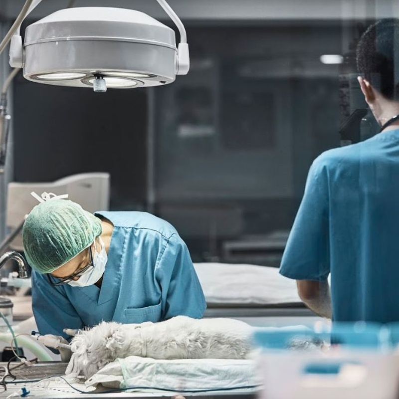 Cirurgies: Serveis especialitzats de Arca Veterinaria