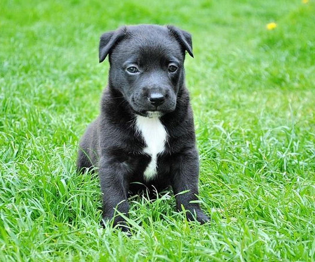¿Por qué es importante cumplir con el calendario de vacunas de tu mascota?