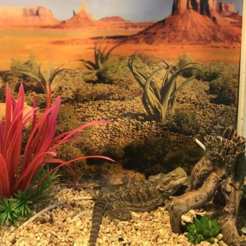 ¿Te gustan los reptiles?