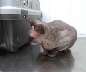 Atención personalizada a mascotas en Tenerife