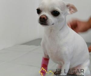 Mejoramos la calidad de vida de tu mascota en El Sauzal