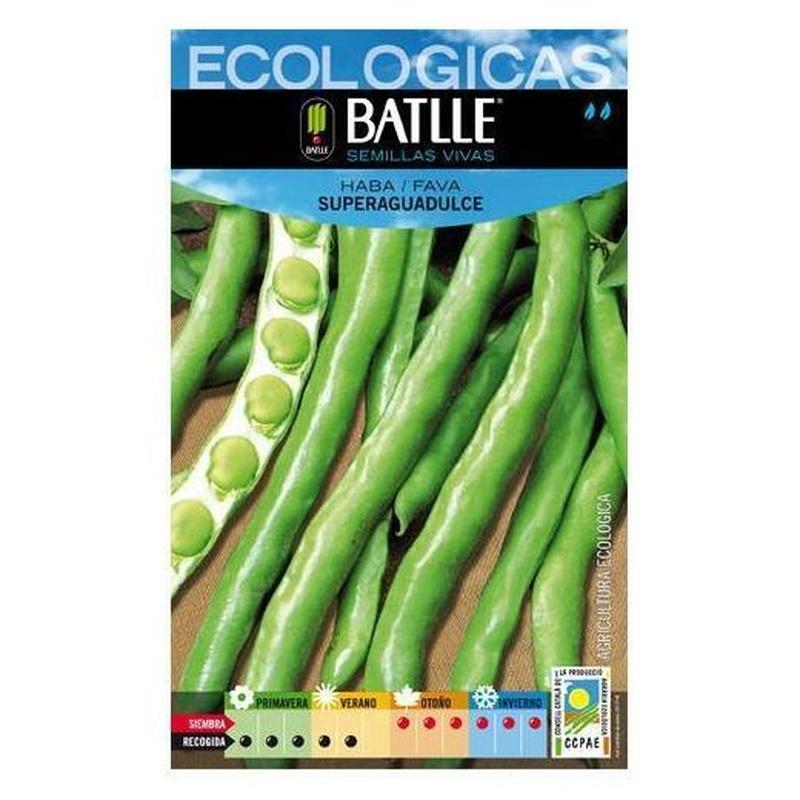 Semillas ecológicas de Haba superaguadulce Ref.33