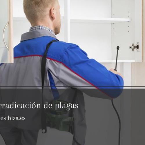 Empresa de fumigación en Ibiza | Desinfecciones Ibiza
