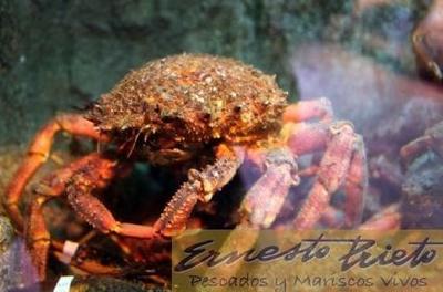 Todos los productos y servicios de Pescaderías: Ernesto Prieto