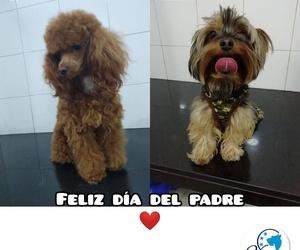 Especialistas veterinarios Tenerife