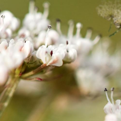 Miel de abejas Badajoz