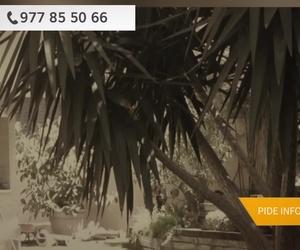 Poda de árboles y palmeras en Reus | Jardinería Cuerba