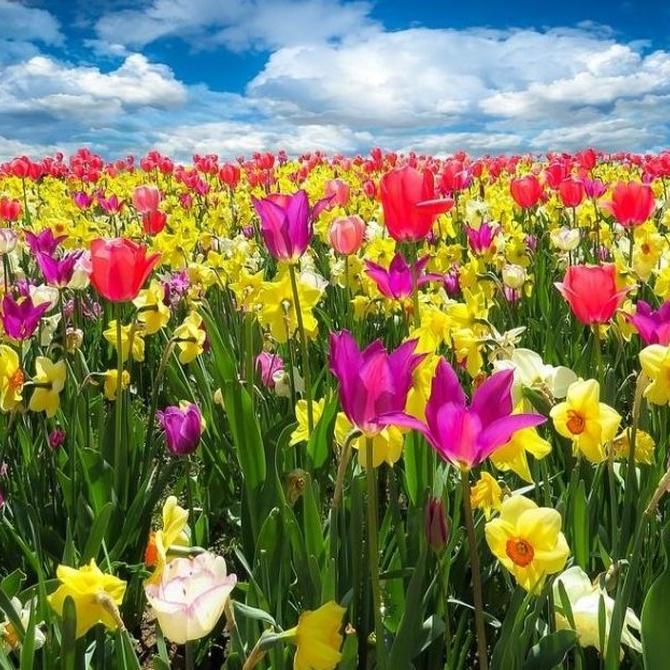 Productos para alérgicos: el sol de oro