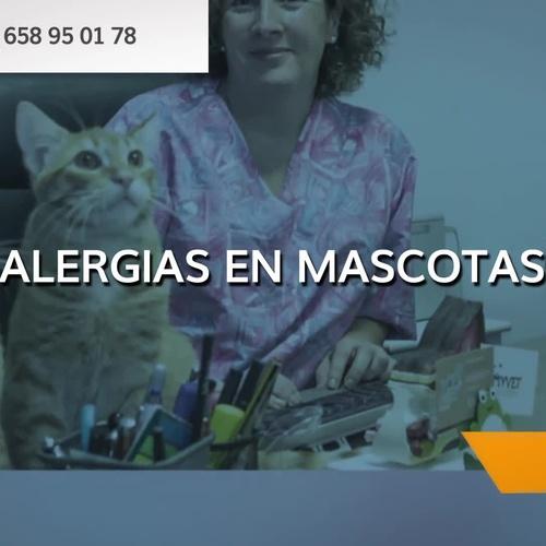 Dermatología veterinaria en Santa Cruz de Tenerife | Dermivet Tenerife