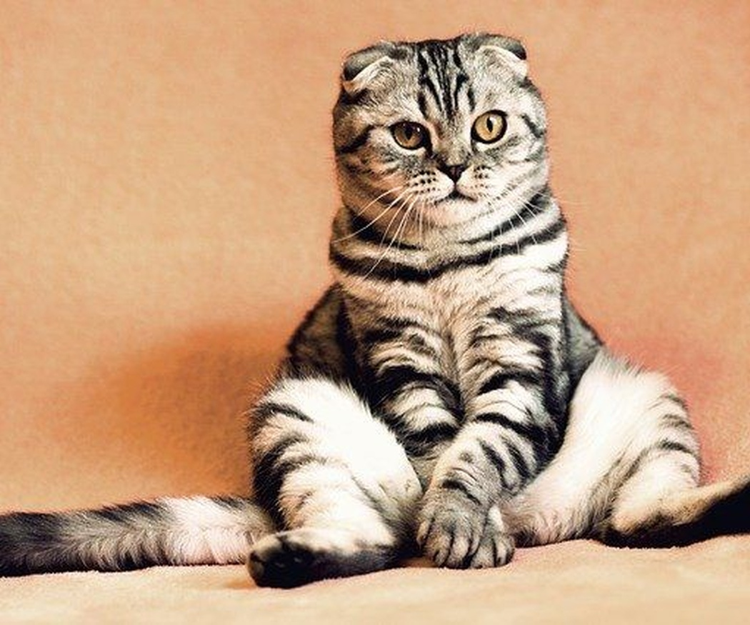 Cómo evitar el estrés a tu gato durante la mudanza