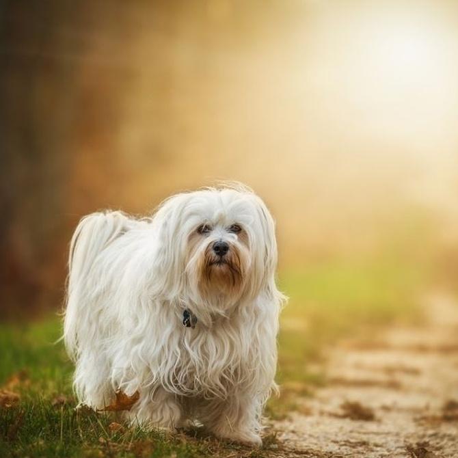 ¿Has oído hablar de la leishmaniasis canina?